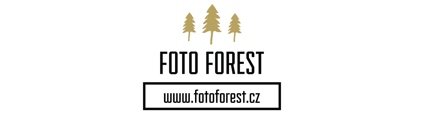 foto-forest